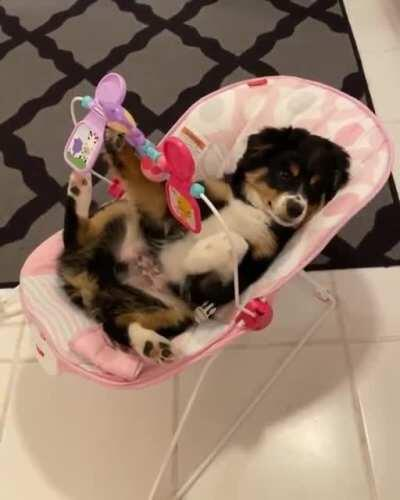 Adorable puppy in a baby chair playing with toys, includes a sneeze at no extra cost!