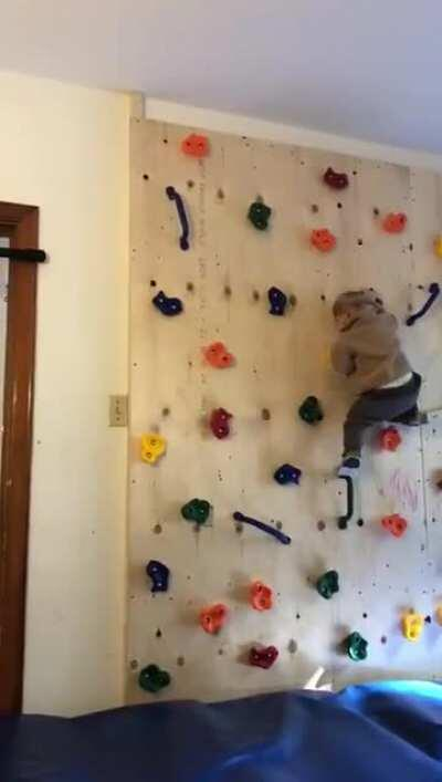 Father built his kid a climbing wall to get him to stop climbing furniture and it only made the tot more powerful