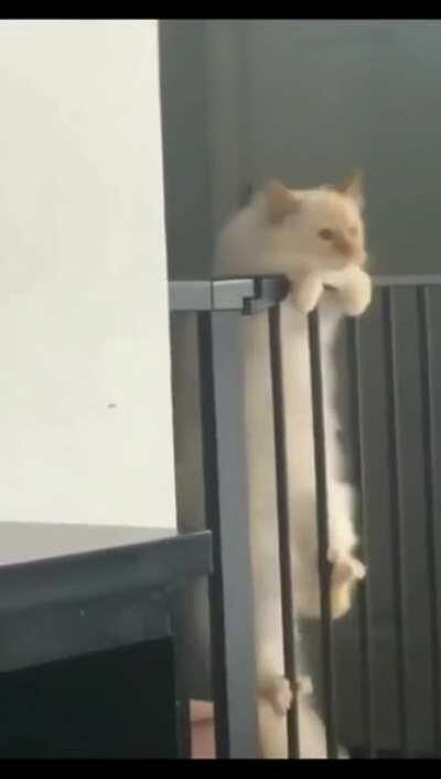 CatsBeingCats