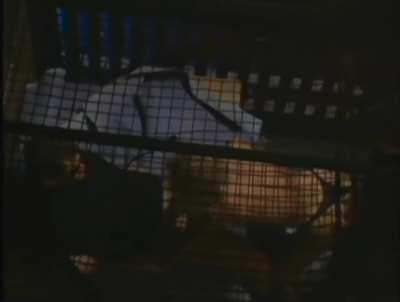 Jenna Jameson gettin smashed in a cage