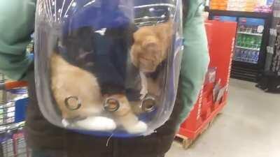 Bubble Cat (walmart encounter)