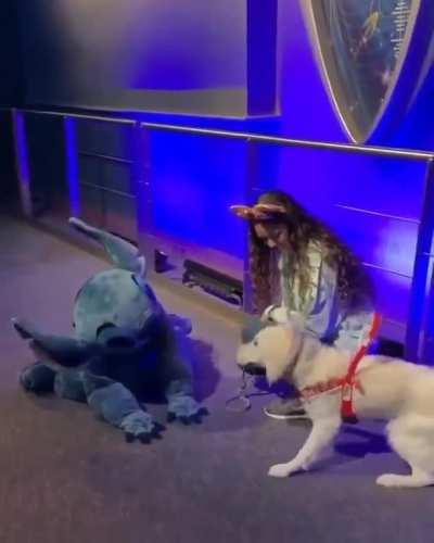 Service doggo meets idol!