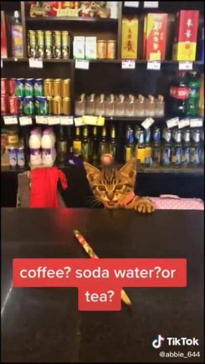 Catswhoyell