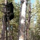 Guy telling a bear to get off his tree stand