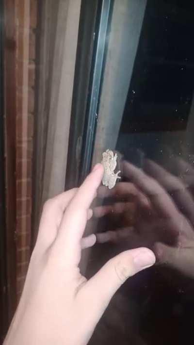 Petting a Frog