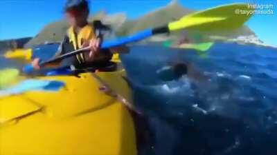 A seal slaps a kayaker with an octopus