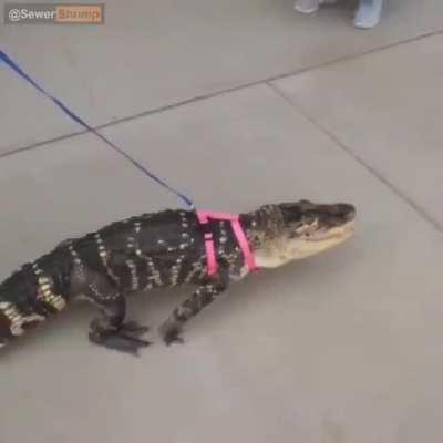 It is now gator wednesday caw caw