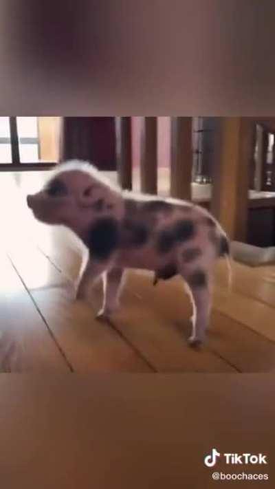 This little piggie found a home