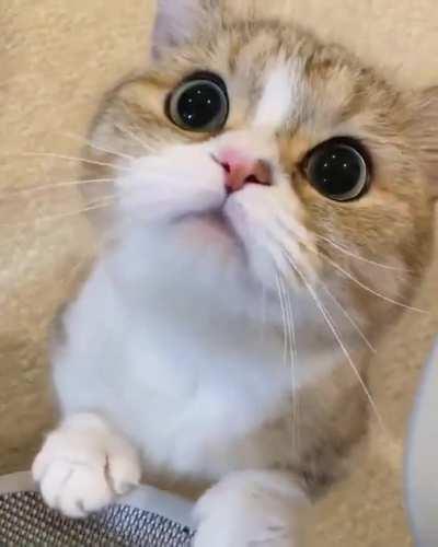 Adorable cutie