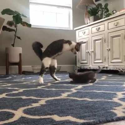Little T-Rex is super excited to meet his new playmate
