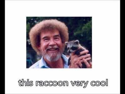 I like raccoon