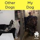 Other dogs vs this dog