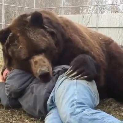 very friendly bear