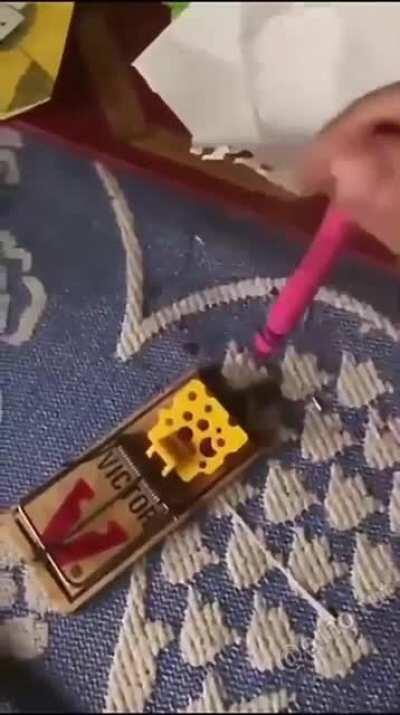 Professional trap tester