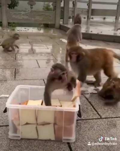 The monkey challenge