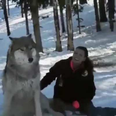 Its a wholesome video but the size of that wolf is scary to me.
