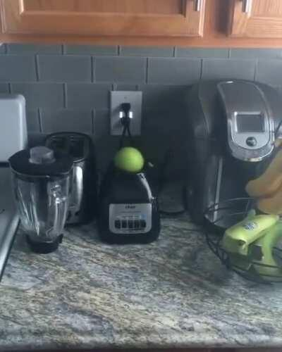Apple on a blender...