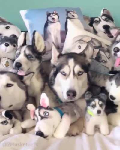 Husky overload