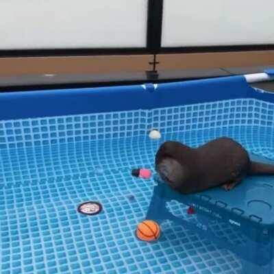 Otter 101