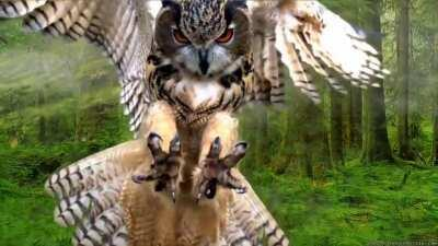 European Eagle Owl is Majestic