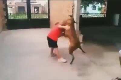 Perro se defiende de Venezolano para no ser comido (ojo copy)