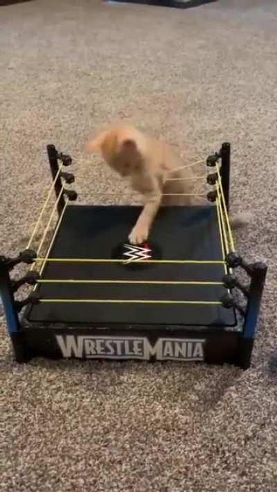 KittenMania!