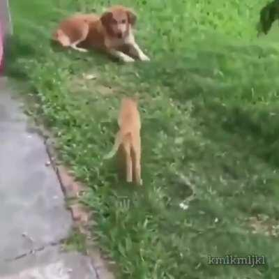 Gato de ataque ativado