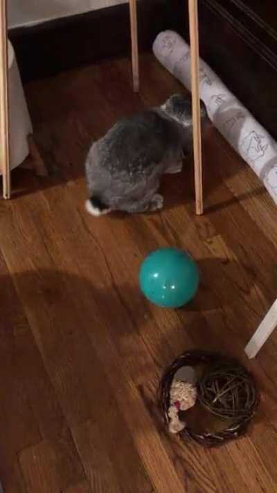 Woodrow's new ball. He likes it I think!