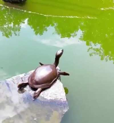 A turtle enjoying a nice little morning stretch by the creek