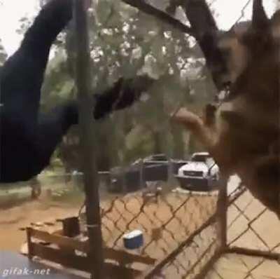 Impressive stunt