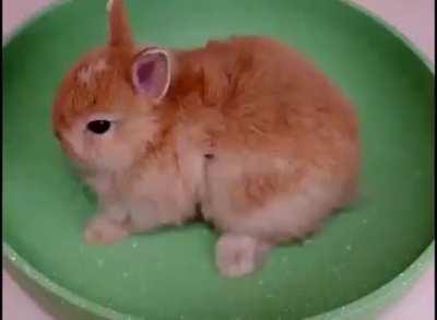 Salted rabbit miam.