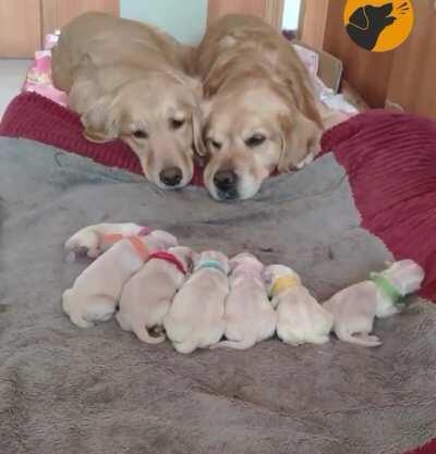 I guess everyone enjoys looking at puppies