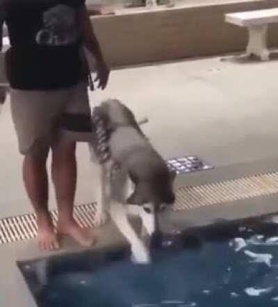 The reluctant swimmer.