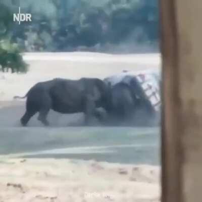 Hey rhino .......
