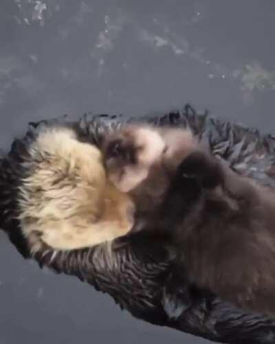 Sure looks like Otter love - emotion