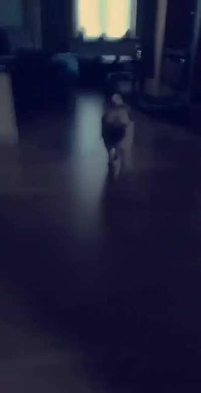 Doggo attack