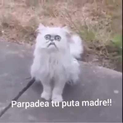 Pinche gato XD