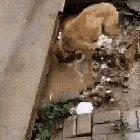 The hero dog saving puppies from the flood!