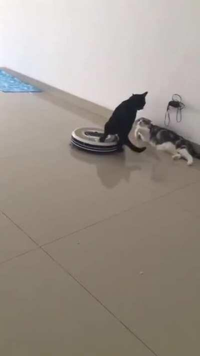 this cat is smooth.