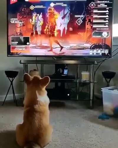 DoG GoT ChAsED by A RObOt and FUcKinG DiES