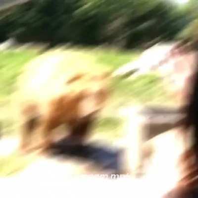 MAAU - Video #1718