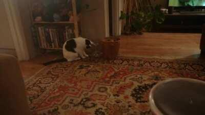 Cat enjoys playing with spider