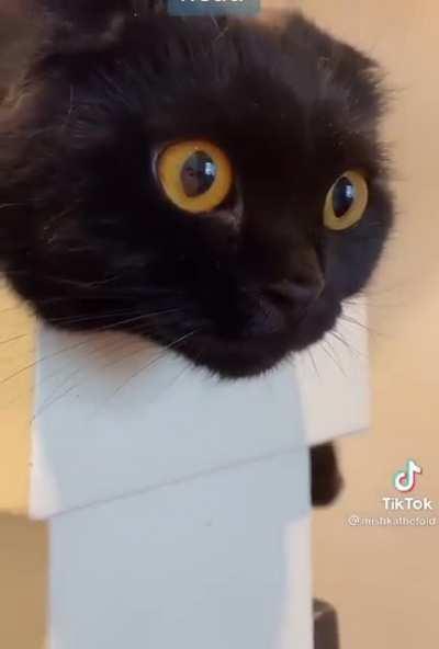 Dark random cat thoughts