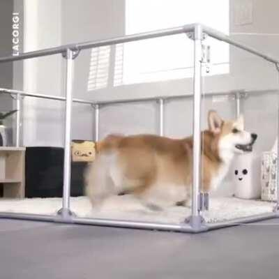 Too adorable.. little corgi with his own place!