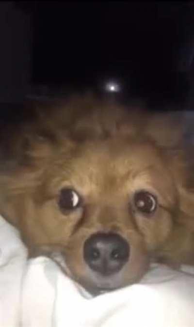 Pupper wants a good pet