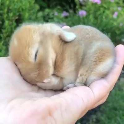 Bunny bleach