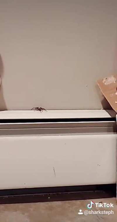 Spider in my basement 😰🕷