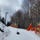 Dog testing this toboggan run in Austria (copyright Naturhotel-Forsthofgut)