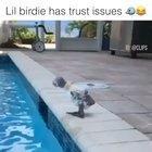 trust issue