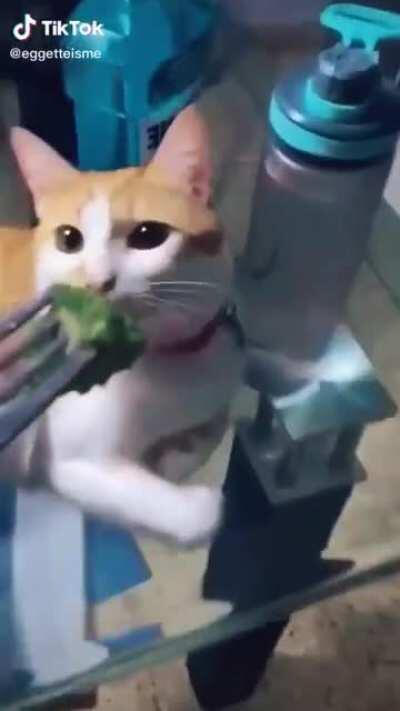 Perfectly cut cats rule this sub...